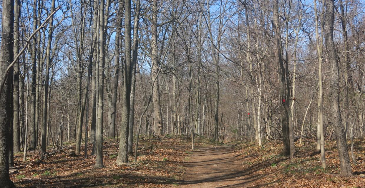 Red Loop Trail in Flat Rock Brook Nature Center. Photo by Daniel Chazin.