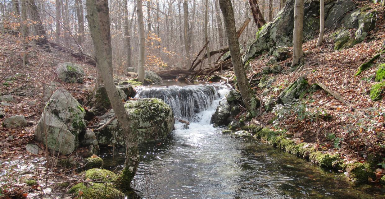 Cascading stream on the Manaticut Point Trail in Norvin Green State Forest. Photo by Daniel Chazin.