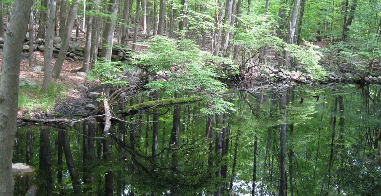 By a pond at Ward Pound Ridge Reservation - Photo: Jane Daniels
