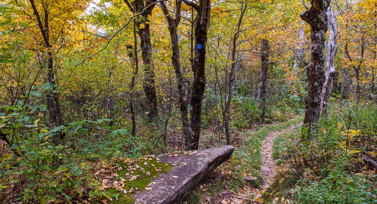 The Long Path in the Catskill's Windham High Peak. Photo by Steve Aaron.