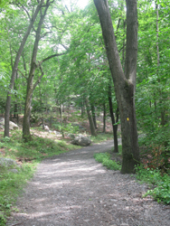 Typical Section of De Camp Trail. Photo by Daniel Chazin.